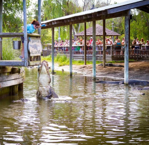 Alligator Adventure Vacation Planning Guide