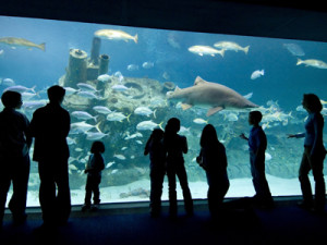 NC Aquariums Ft Fisher Vacation Planning Guide