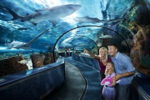 Ripley's Aquarium Vacation Planning Guide
