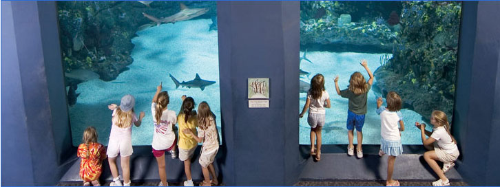 Aquarist Ft Fisher Aquarium