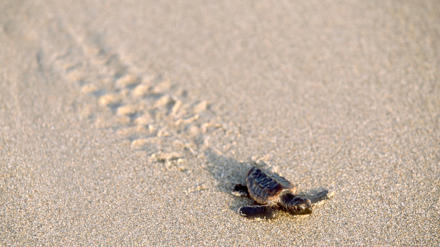 Bald Head Island Tide Chart