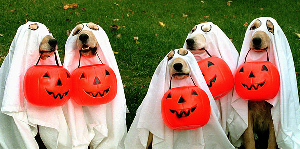 Howl-o-ween Southport